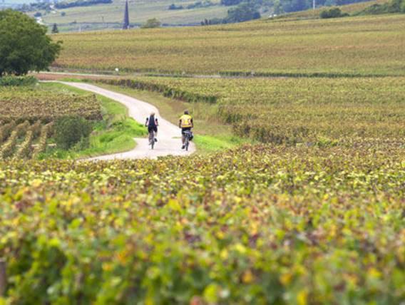 Bordeaux, le plus beau vignoble du monde